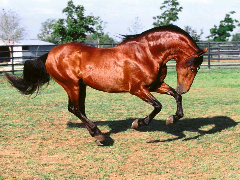 Maro 2014 ayrtonsennabecalle pgina 2 cavalo puro sangue arabe fandeluxe Choice Image