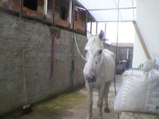 Maro 2014 ayrtonsennabecalle pgina 2 meu pimeiro cavalo fandeluxe Choice Image